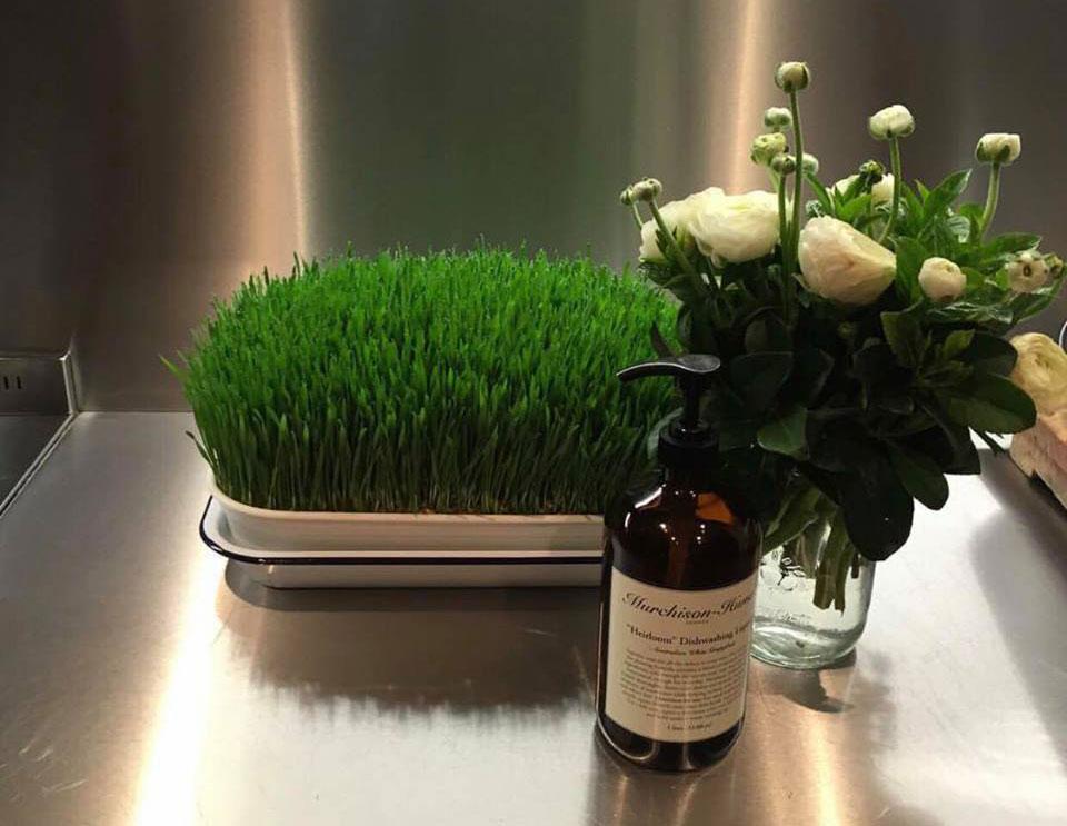 wheatgrass colon health